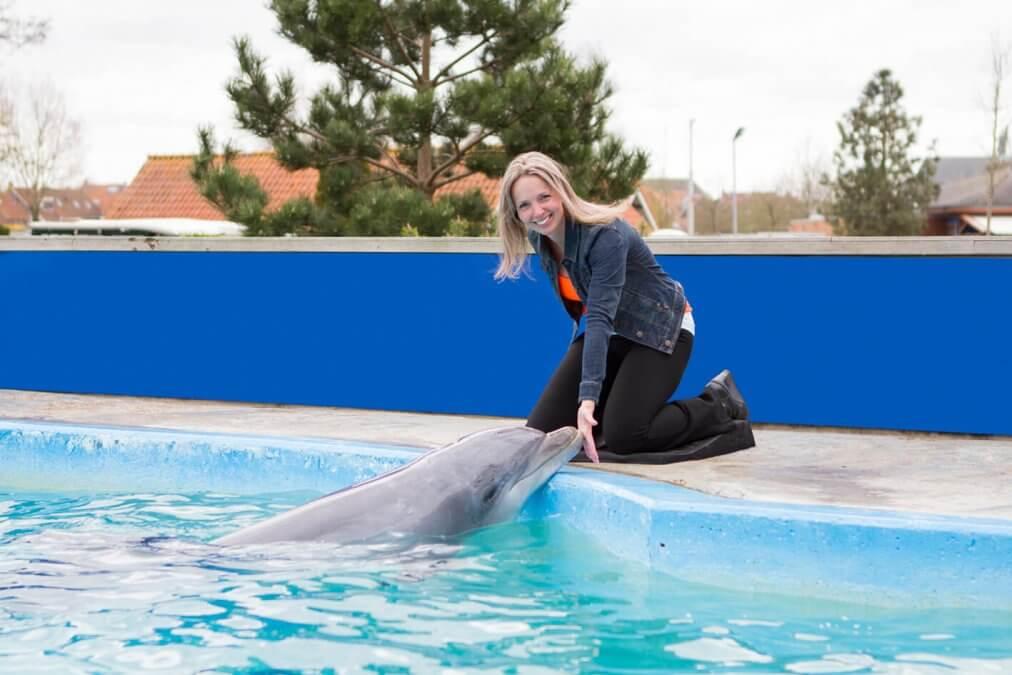 fotomoment Dolfijn