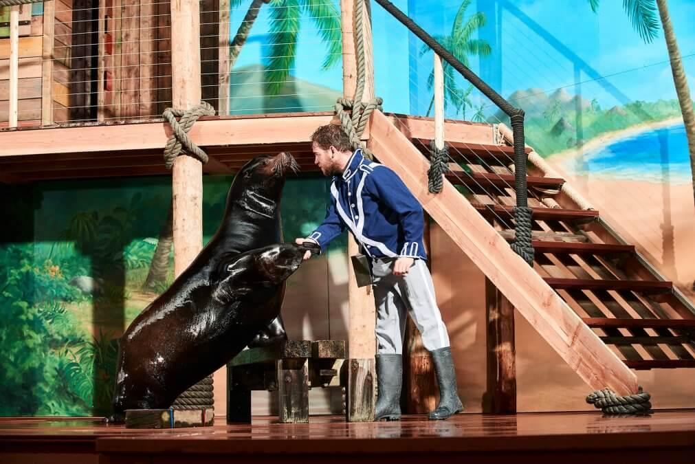 zeeleeuwen theater