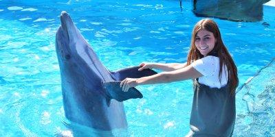 Afbeelding bij In het water met dolfijnen V.I.P.