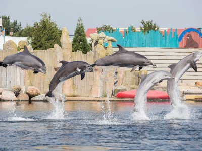 Photo - Dolfinarium temporarily closed due to coronavirus