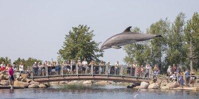 Afbeelding bij Dolfijnendelta