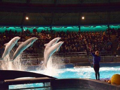 Dolfijnenvoorstelling