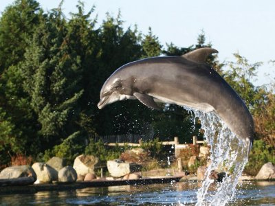 Foto - Dolfijn Skinny overleden