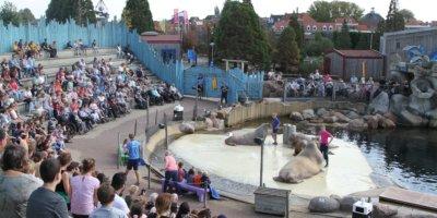Afbeelding bij Walrussenwal