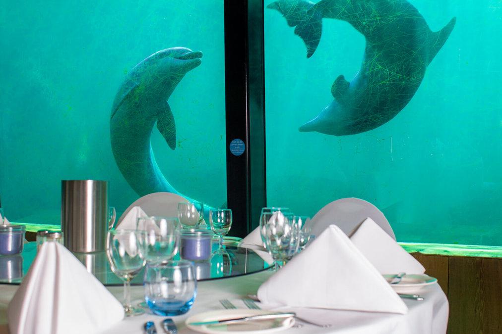 Onder Odiezee dolfijnen