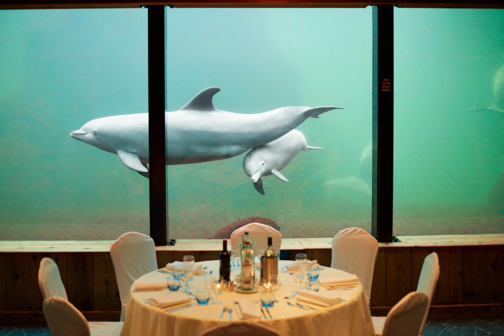 Onder Odiezee tafel met dolfijn