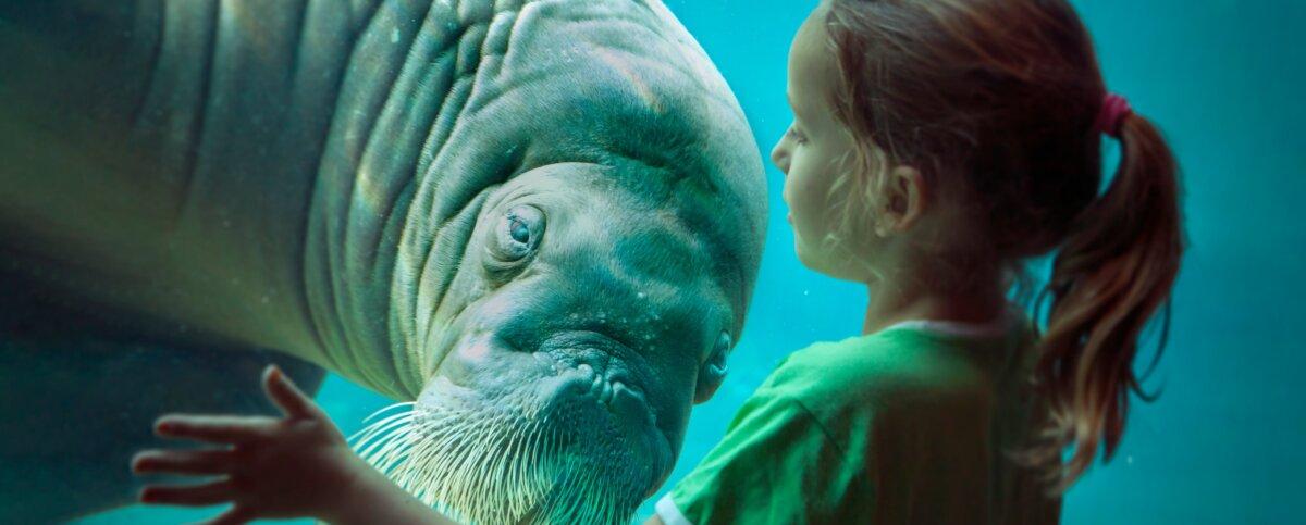 Meisje met walrus