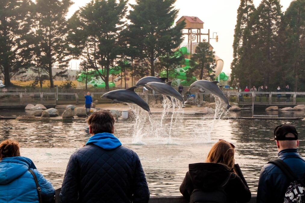 springende dolfijnen bij dolfijnen delta