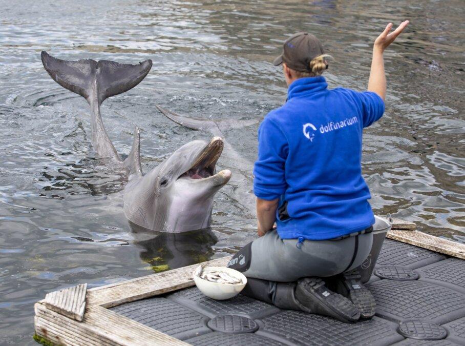 dolfijn met verzorger
