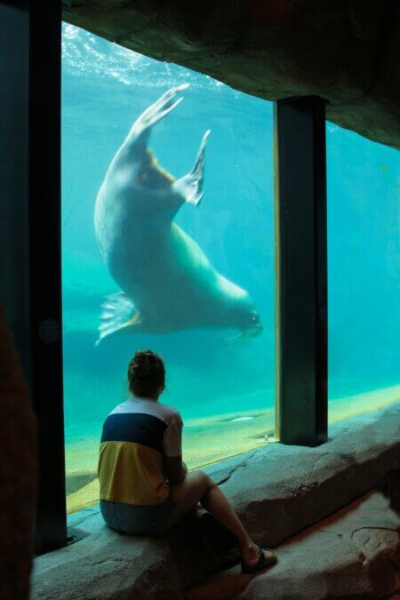 Meisje bij walrus