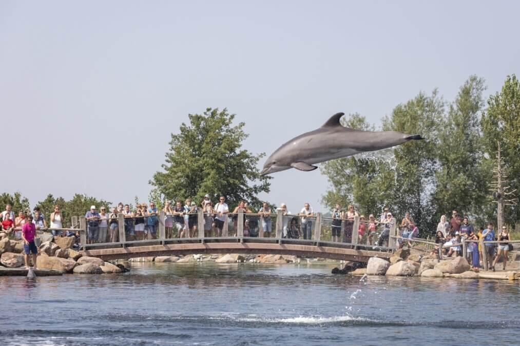 dolfijn sprong
